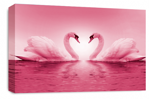 Love Heart Wall Art Picture Kissing Swans Pink White Grey Print